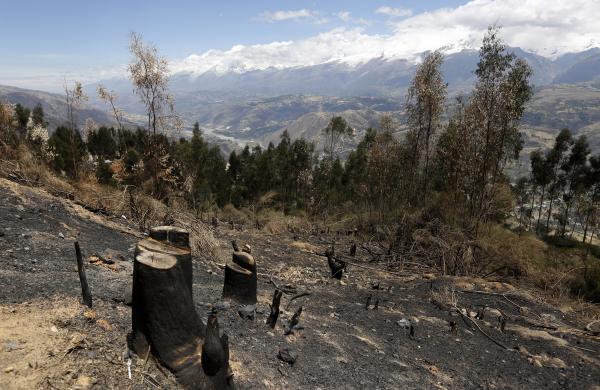 ЕС требует усилить вырубку украинских лесов на экспорт