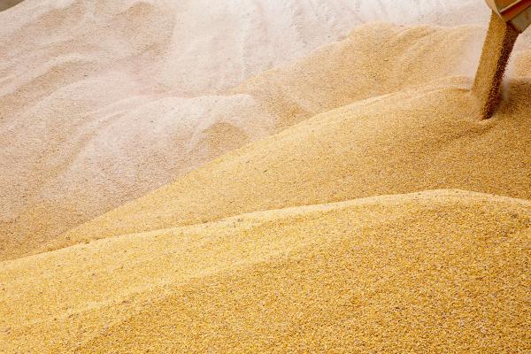 Китай запретил кввозу урожай изУкраины