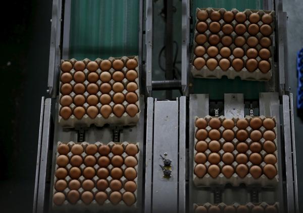 Израиль приостановил импорт украинских яиц, найдя в них сальмонеллу