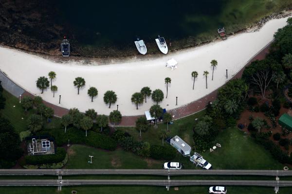 Найдено тело ребенка, ставшего жертвой крокодила вДисней-парке Флориды