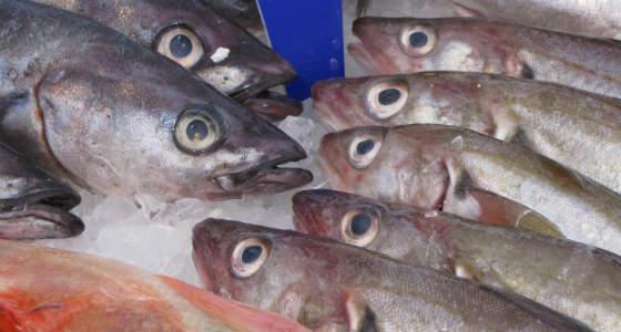 Путин поручил кабмину разработать предложения по запрету на госзакупки импортной рыбы