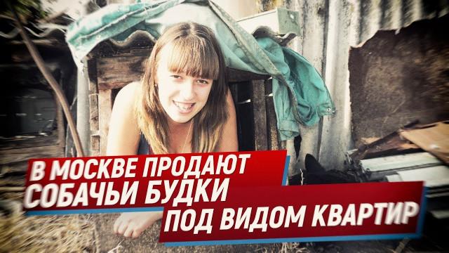 В Москве продают собачьи будки под видом квартир (Telegram. Обзор)